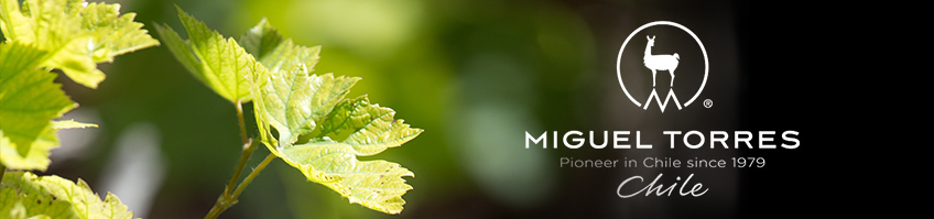 Bodega MIGUEL TORRES.Chile