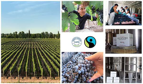 REDPURO Organic Vineyards La Paz – Mendoza.Argentina