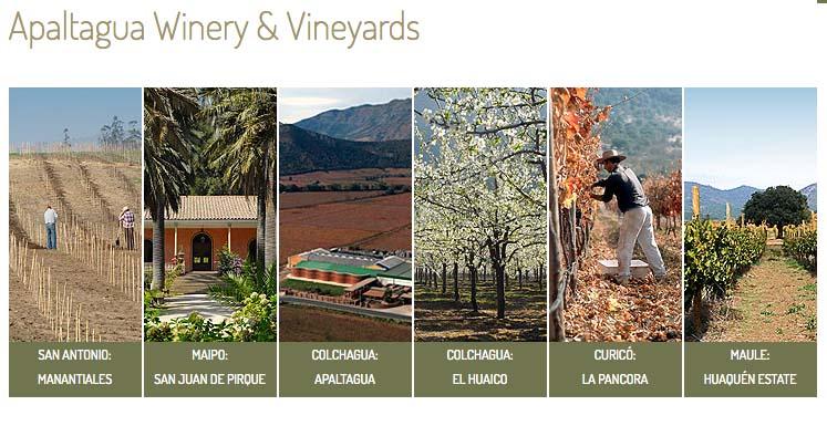 Vinicola APALTAGUA . Chile